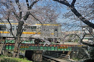 Sakura1_20140330