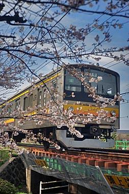 Sakura2_20140330