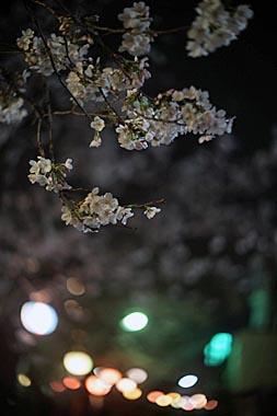 Sakura5_20140330