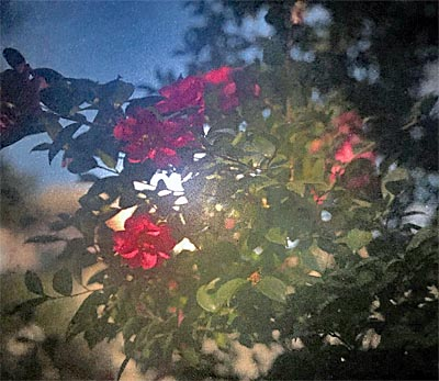 O_camera7_20190109
