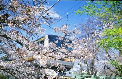 Sakura4_20210325